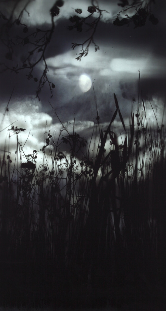 15. Gibbous Moon Reeds