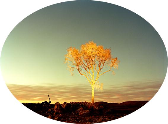 FG Leopard Tree