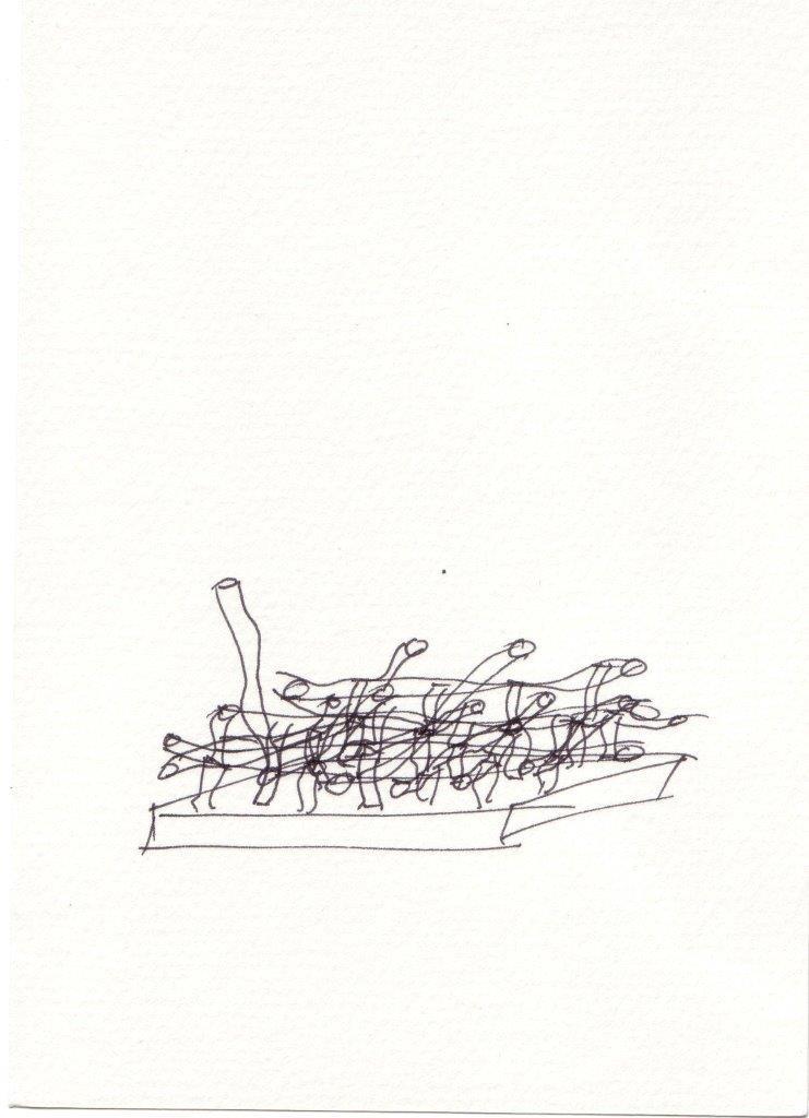 11.Microtubuli sketch
