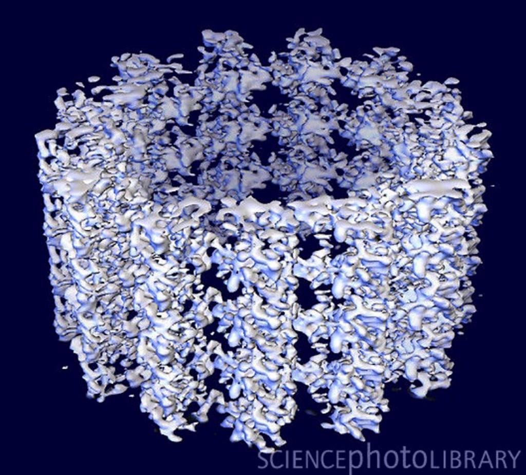 13. Microtubuli computergenerated
