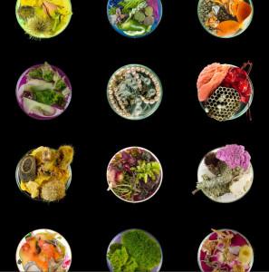 Details from Vanitas (in a Petri Dish) Series 2013 Inkjet print on archival paper 20 x 20 in. each