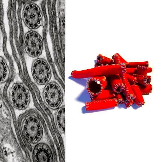 Microtubules / Motion ©Vasia Hatzi