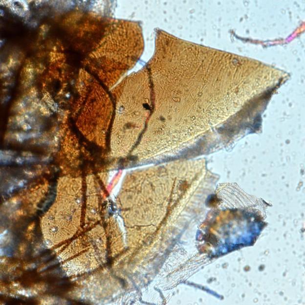 Studies in 18th century dust from Metamorphoses.