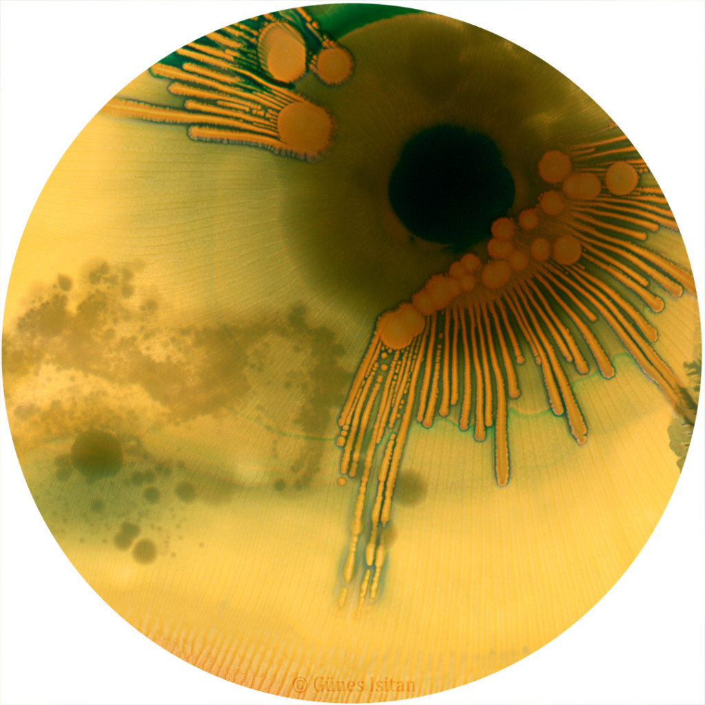 "Günes-Hélène Isitan: The Gaze From Within. Image grown from a woman's belly button. Digitized biological art printed on white aluminium, 24"" circular, 2014"