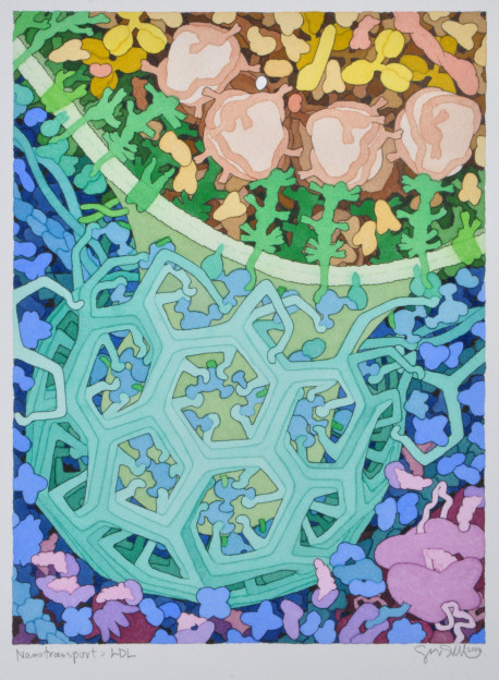 David Goodsell: Nanotransport: LDL