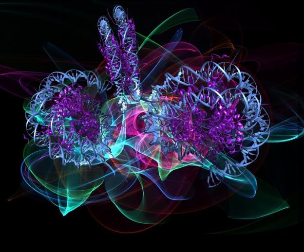 Susanna Monti: Photon BioFlowers