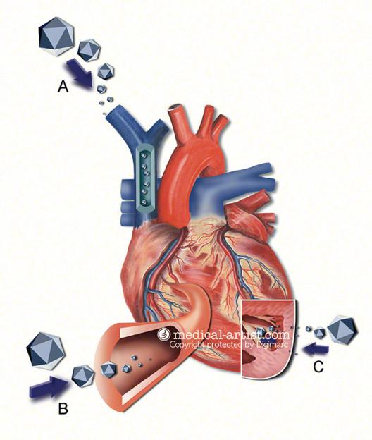 Joanna Culley: Heart, watercolour.