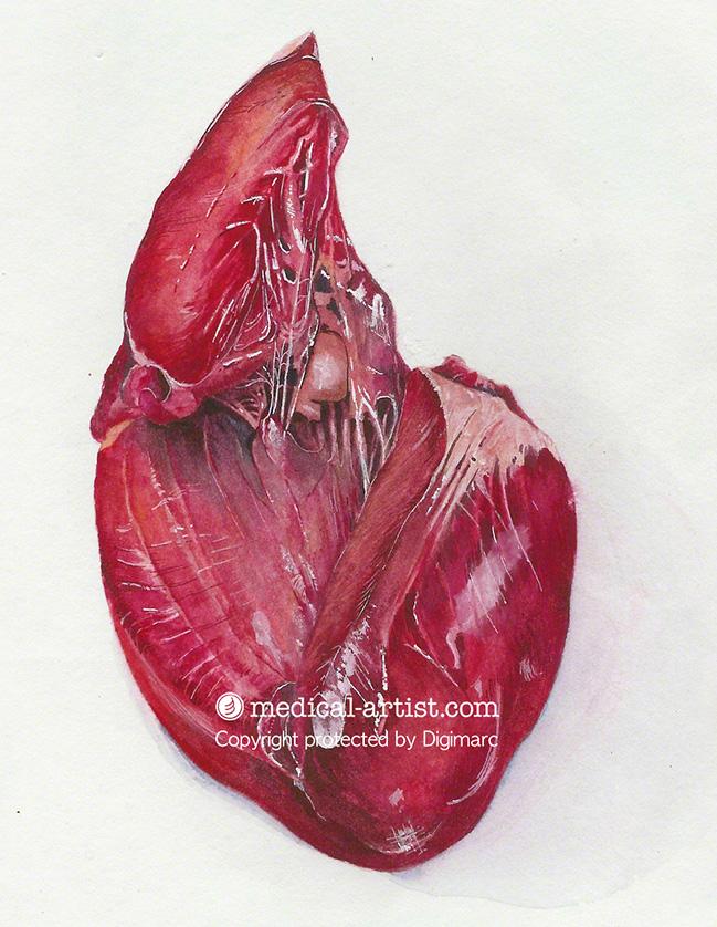 Heart-watercolour