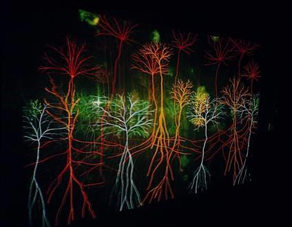 Andrew Carnie, Magic Forest, 25-minute 35 mm slide-show installation (2002), as exhibited in the Einfach Komplex exhibition, Museum of Design (Museum für Gestaltung), Zurich, 2005. Photo courtesy of the artist.