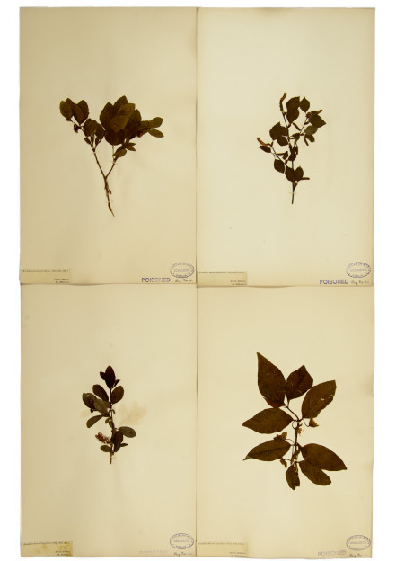 Siobhan McDonlad: A space and time outside'.  Herbarium constituents, 1-2, pressed plants, brought back from the 1825 Franklin Expedition. Courtesy of the National Botanic Gardens