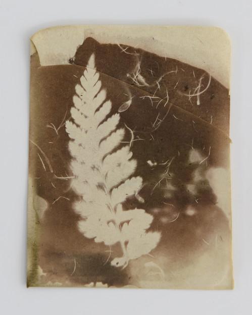 Siobhan McDonald: Cyathea australis (2017)